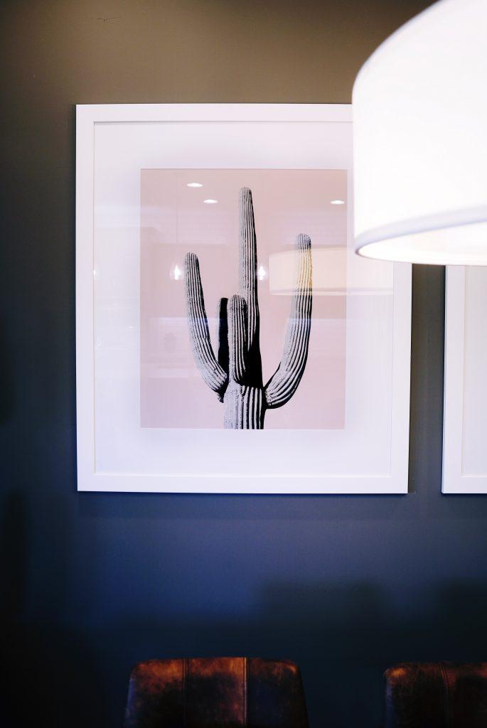 Bild eines Kaktus an einer dunklen Wand