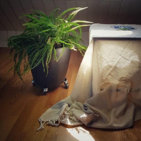 Pflanze, Tisch mit Stoff bedeckt