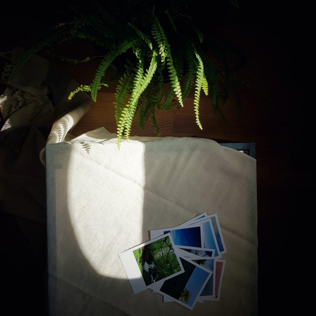 Pflanze, Tisch und Bilder