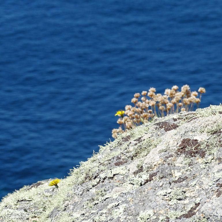 mit Flechten bewachsener Stein vor blauem Meer