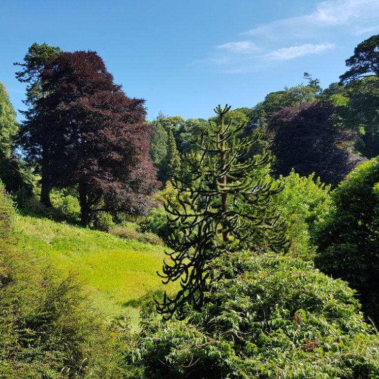 grüne Bäume in einem Wald