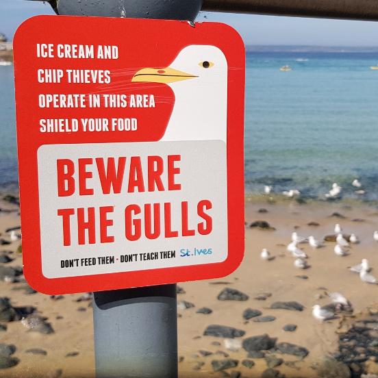 Warnschild vor aggressiven Möwen