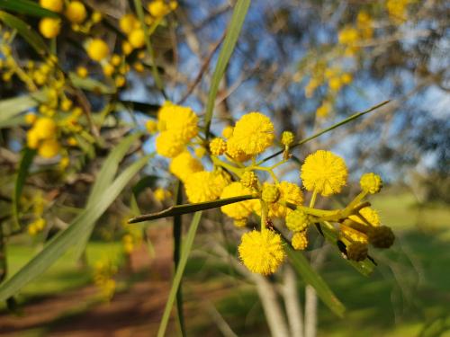 Detailaufnahme einer gelben Blüte