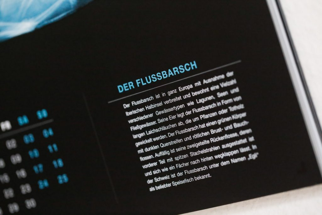 Detailansicht Fischkalender Infotext Flussbarsch