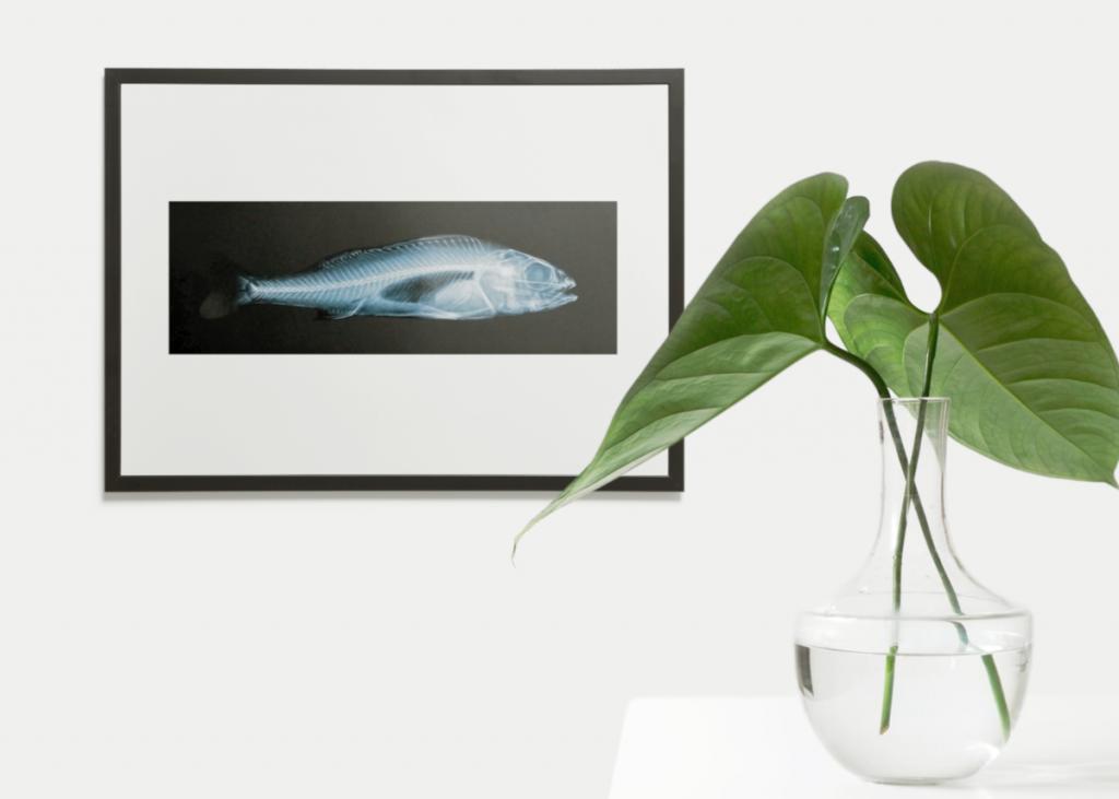 Mockup Röntgenbild eines Fisches in einem schwarzen Bilderrahmen